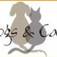 dogsandcats | Social Profile
