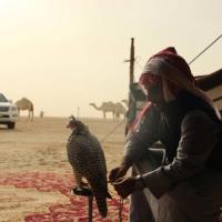 محمد سلمان الصباح | Social Profile