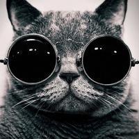 Кіт 25% (@oleg_crimea)