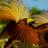 @Panorama_Papua