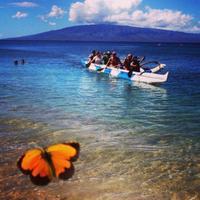 Maui Paddle Sports | Social Profile