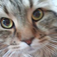 のんちゃま | Social Profile