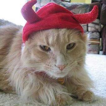 Horny Kitten | Social Profile