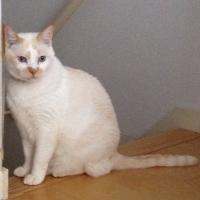一陽来復 ねむり猫 | Social Profile