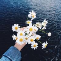 에이프릴 | Social Profile