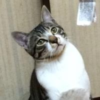 まるちゃん | Social Profile