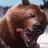 The profile image of kumaoVG