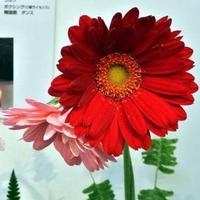 ワンワン | Social Profile