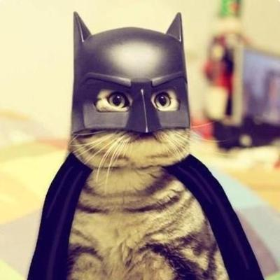 Batcat | Social Profile