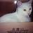 白猫@10/15臆病な伯爵令嬢は揉め事を望まない1,2巻発売予定