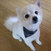 ピンクパンサー@花嫁募集中ポメラニアン | Social Profile