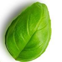 Herbilicious   Social Profile