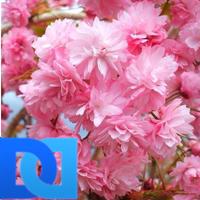 rose t m | Social Profile