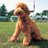 dog_ranking