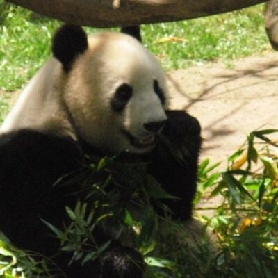 snliang | Social Profile