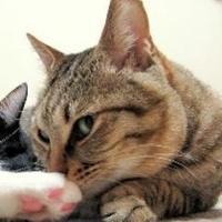 とめ(猫奴隷) | Social Profile