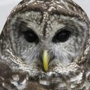 Photo of MaddowBlog's Twitter profile avatar