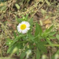 오타사오정 | Social Profile
