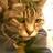 cattabbycat