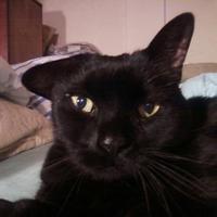 my cats | Social Profile