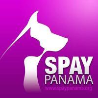 @spaypanama