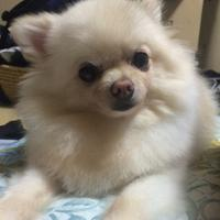 ポン | Social Profile