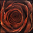 qoqijygomoda profile