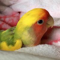 紺野亜異実 | Social Profile