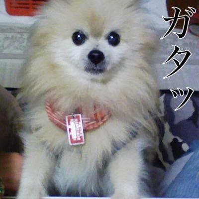 蜂城縞キヲン(おそらく八丈島キョン) Social Profile