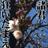 1123_shino_Jsl