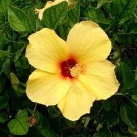 alohaman | Social Profile