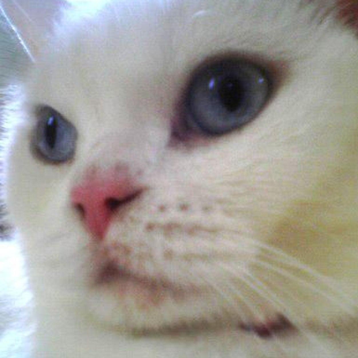 ただの白猫です Social Profile