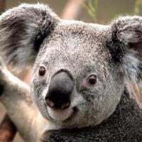 Dr_Koala™ | Social Profile