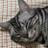 The profile image of nonnmy