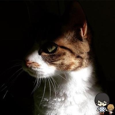 すかもきゅ | Social Profile