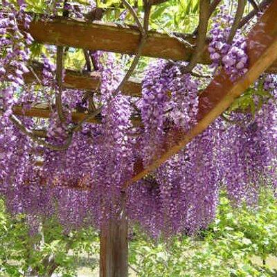 wisteria | Social Profile