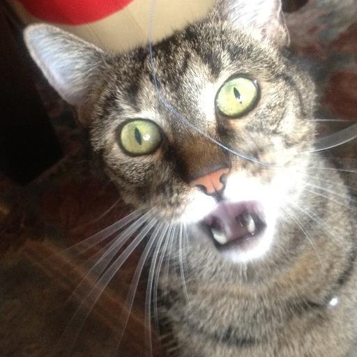 il gatto Social Profile