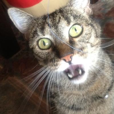 il gatto | Social Profile