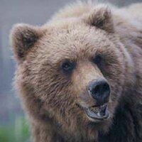 Hallo Bay Bear Camp | Social Profile