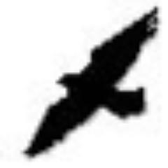 The Raven   Social Profile