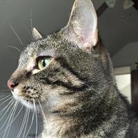 Elmak | Social Profile
