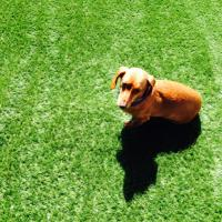 Jack the Dachshund! | Social Profile