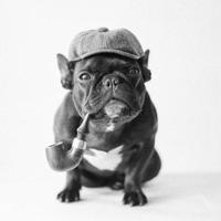 Trotter | Social Profile
