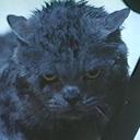 The Horror Cats (@HorrorCats) Twitter