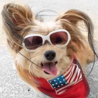 Jeanie 3-Legged Dog | Social Profile