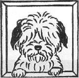 空犬(空犬太郎) Social Profile