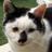 The profile image of hagakure486