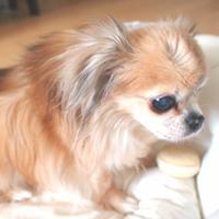 大森祥子 | Social Profile