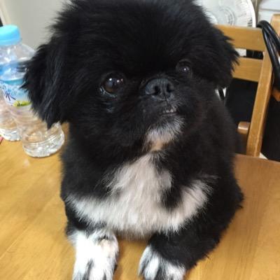 新井辰也 | Social Profile