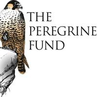 The Peregrine Fund | Social Profile